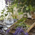 1 thing you need on all travels: Lavender hydrolate