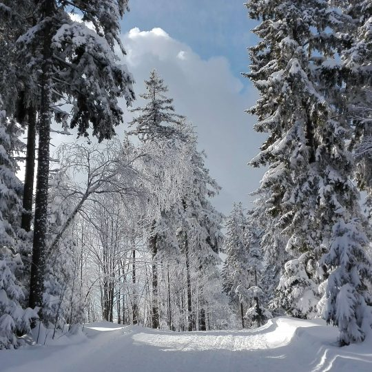 Best winter hikes on Pohorje, Slovenia